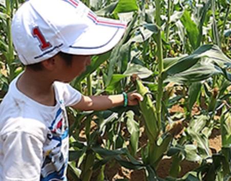 千葉県柏市にある「奥手賀ツーリズム Kingfisher Garden」の農業体験