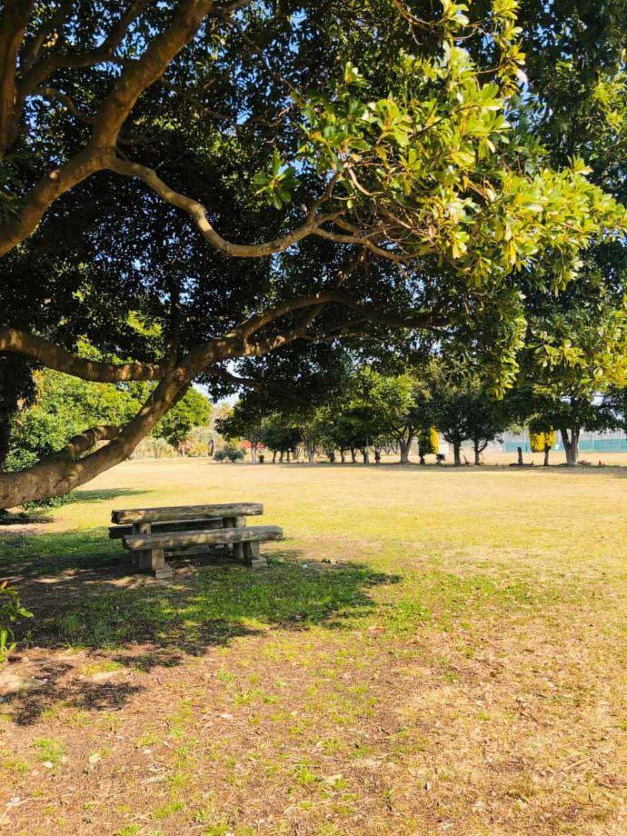 大串キャンプ場の木陰で休めるベンチとテーブル