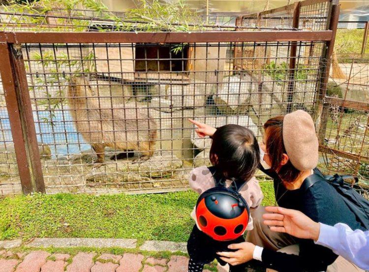 福岡県飯塚市にある「ピクニカ共和国」の動物や安全柵