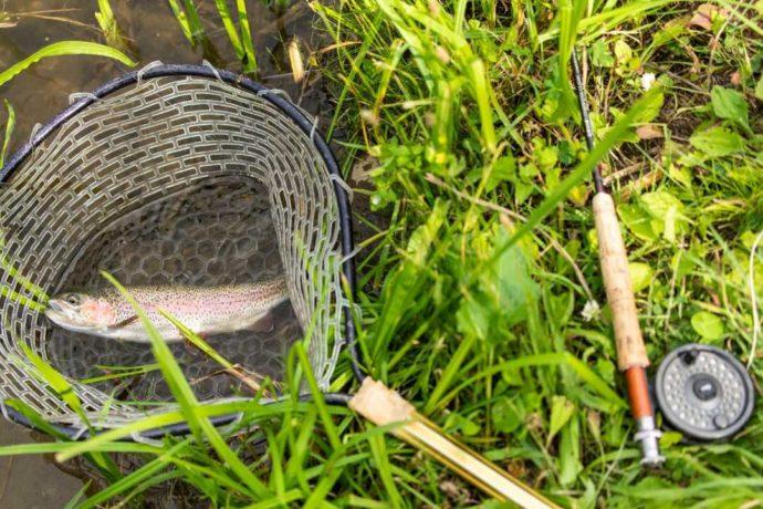 アカイガワ・トモ・プレイパークで釣った魚