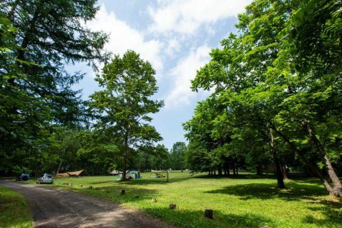 北海道余市郡にあるアカイガワ・トモ・プレイパークの林間サイト