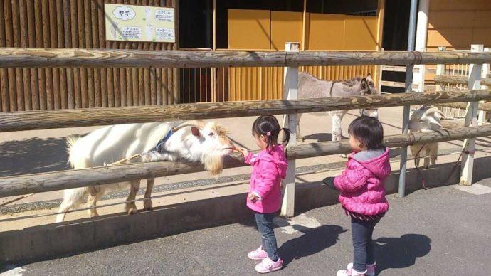 大分県別府市にある別府ラクテンチで子供が動物とふれあう様子