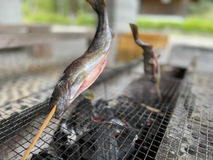岡山県新見市にある別所アウトドアスポーツセンターで釣れた魚