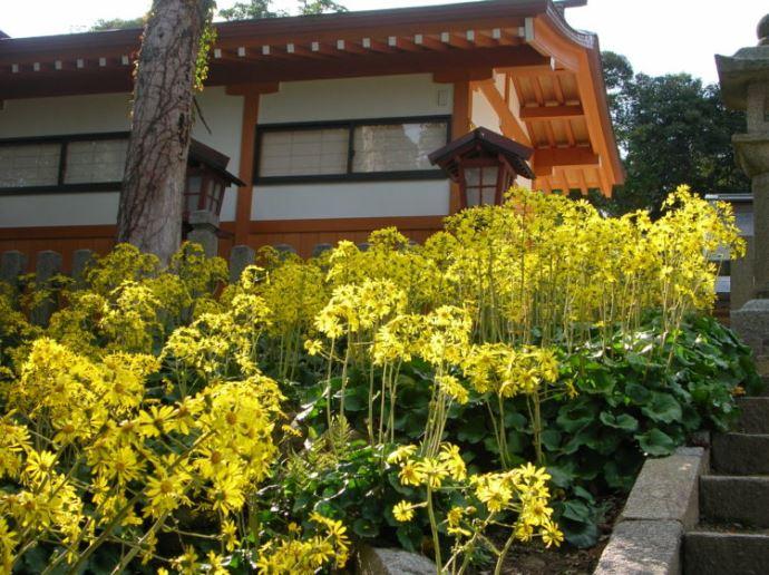 山王宮日吉神社の神前結婚式ならではの良さについて