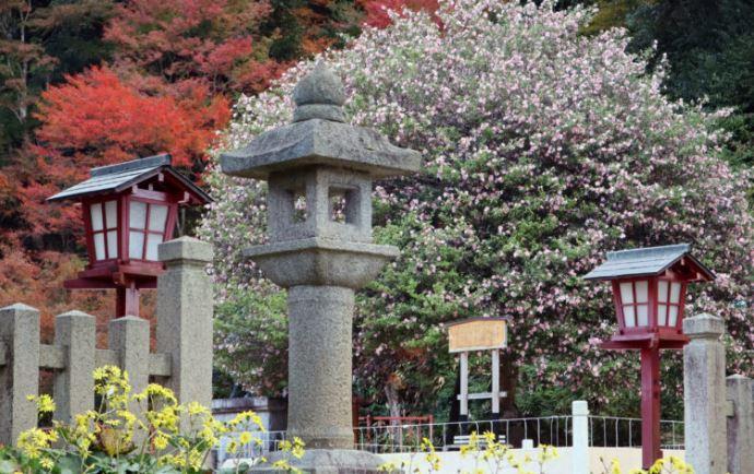 山王宮日吉神社について