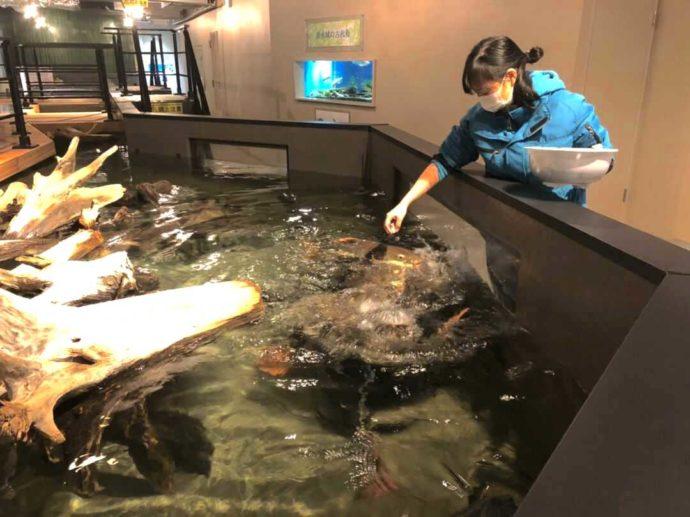 熊本県上天草市にあるわくわく海中水族館シードーナツの清水さん