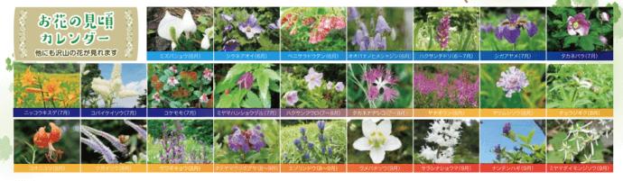 東館山高山植物園のお花の見頃カレンダー