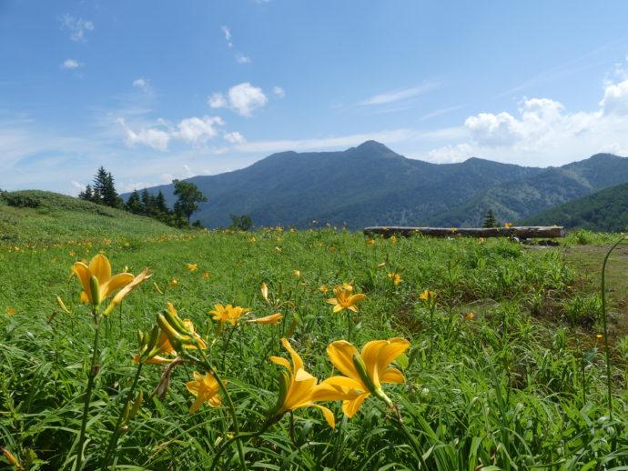 東館山高山植物園のベンチとニッコウキスゲ