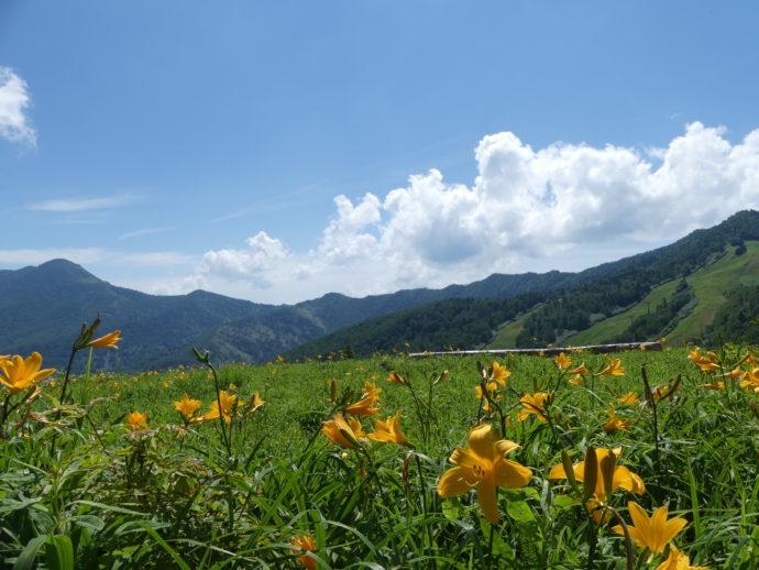 東館山高山植物園の山頂ベンチとニッコウキスゲ