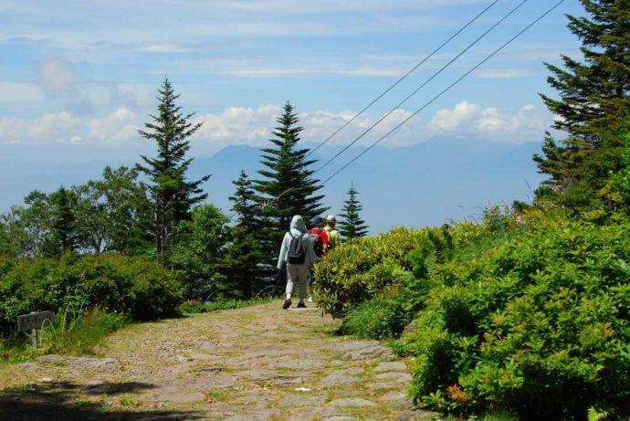 東館山高山植物をウォーキングする利用者たち