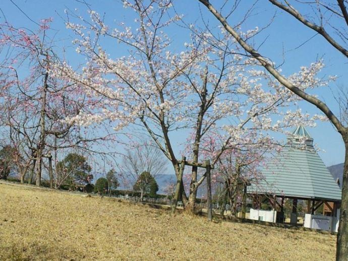 四国三郎の郷でキャンプを始めようと考えているカップルへメッセージ
