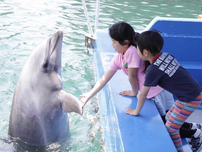 下田海中水族館のイルカに餌をやる子供たち
