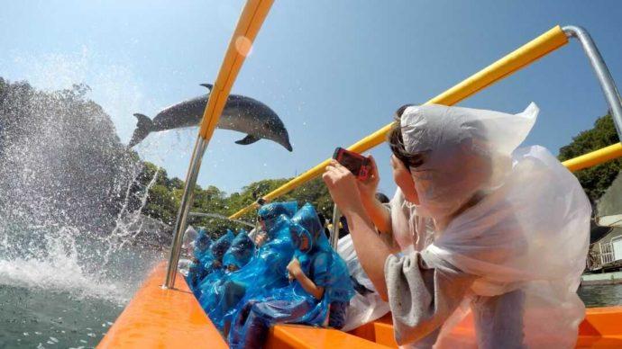 下田海中水族館のイルカショーの特等席でシャッターを切る女性