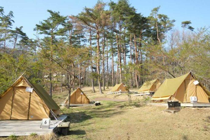 岡山県真庭市にあるひるぜん塩釜キャンピングヴィレッジの木々とテントサイト