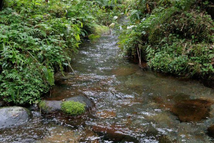岡山県真庭市にあるひるぜん塩釜キャンピングヴィレッジ内にある川の様子