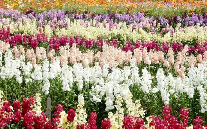 道の駅ちくら潮風王国の周辺に割く花々