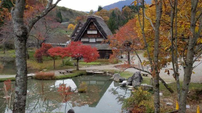 秋の野外博物館合掌造り民家園の様子
