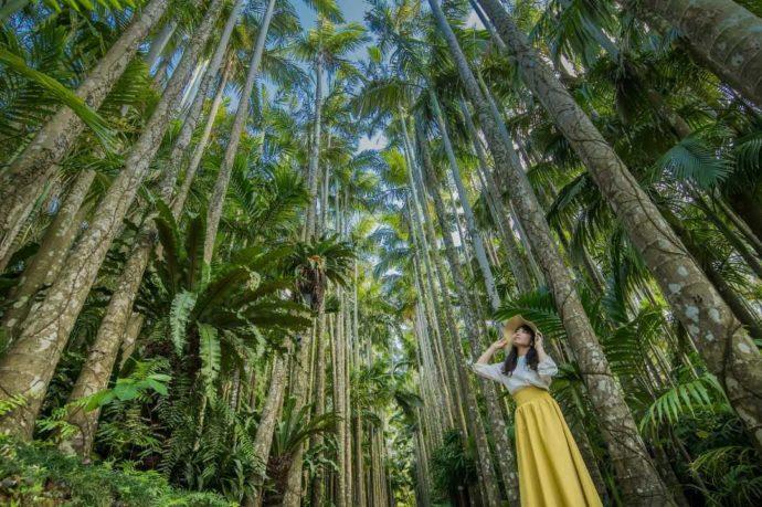 東南植物楽園のユスラヤシ並木