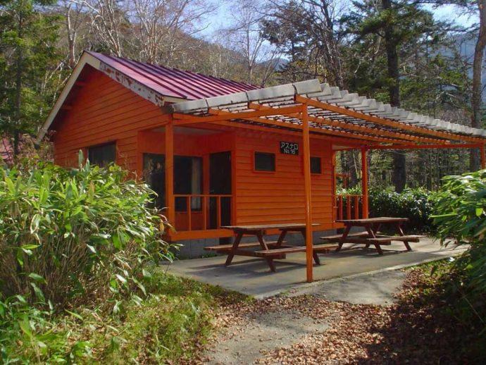 菅沼キャンプ村のアスナロ