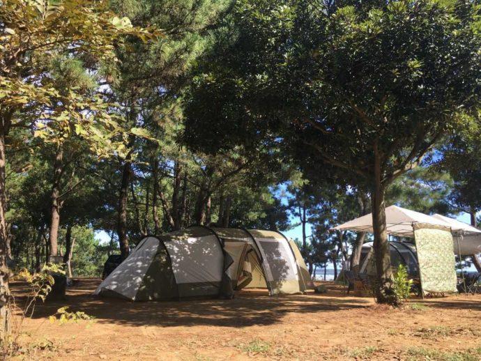 大洗サンビーチキャンプ場の木陰に設置されたテントとタープ