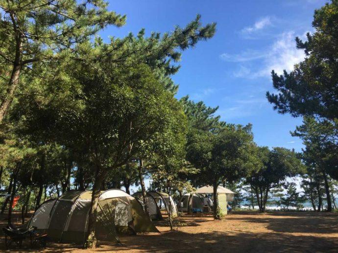 茨城県東茨城郡にある大洗サンビーチキャンプ場の木々が豊かなテントサイト
