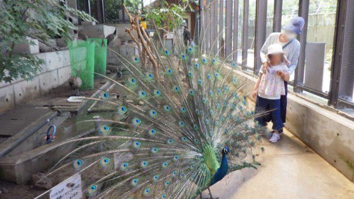 長野県須坂市にある「須坂市動物園」のとりっこ村に訪れる利用者