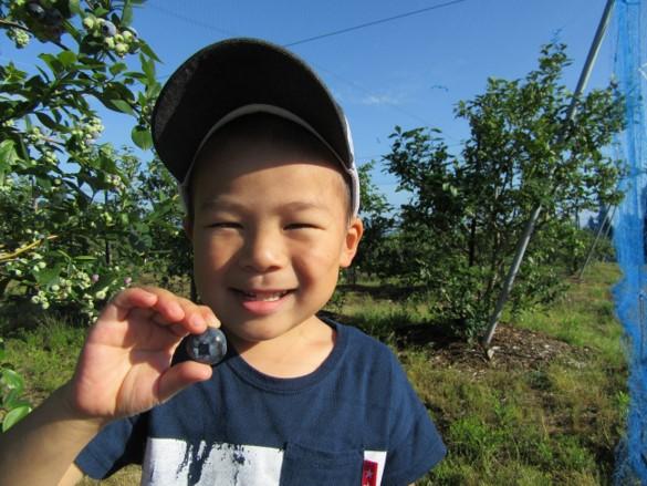 月山高原鈴木農園で収穫できるブルーベリーはどんな品種のものですか
