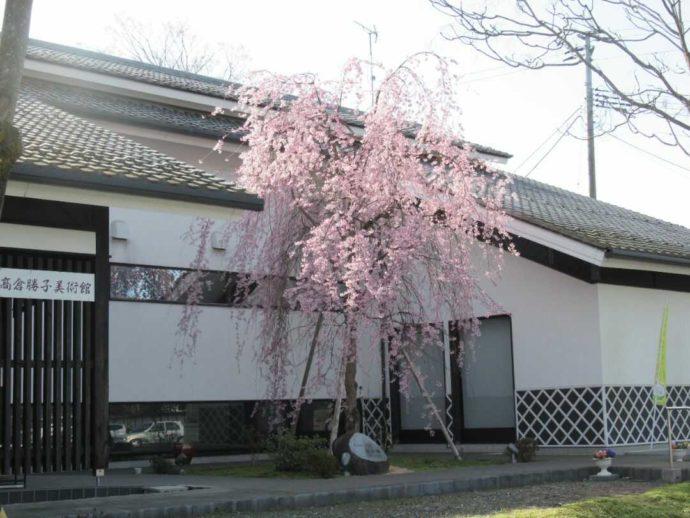 枝垂れ桜が満開の頃の髙倉勝子美術館桜小路