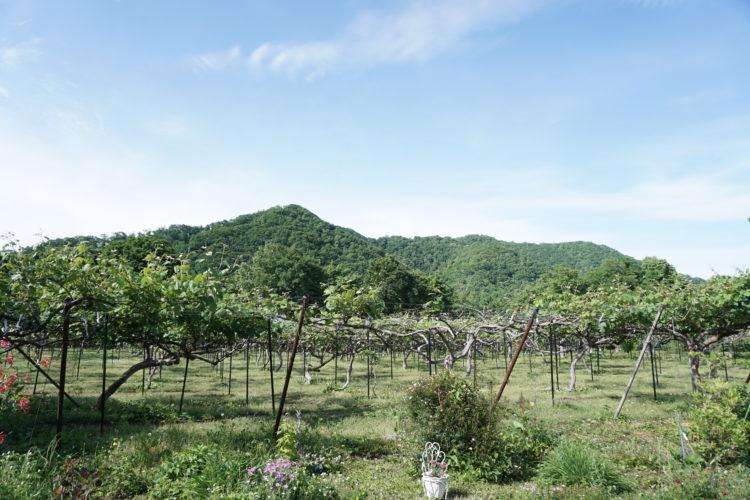 田中果樹園で育てられている果実の栽培方法