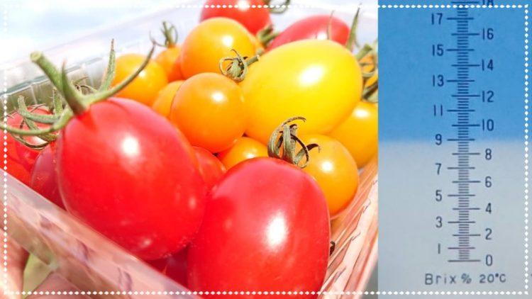 田中果樹園で購入できる甘くて美味しいプチトマト