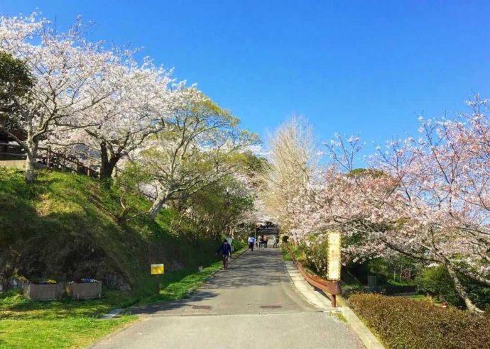 千葉県館山市にある城山公園の山頂広場へと続くスロープ