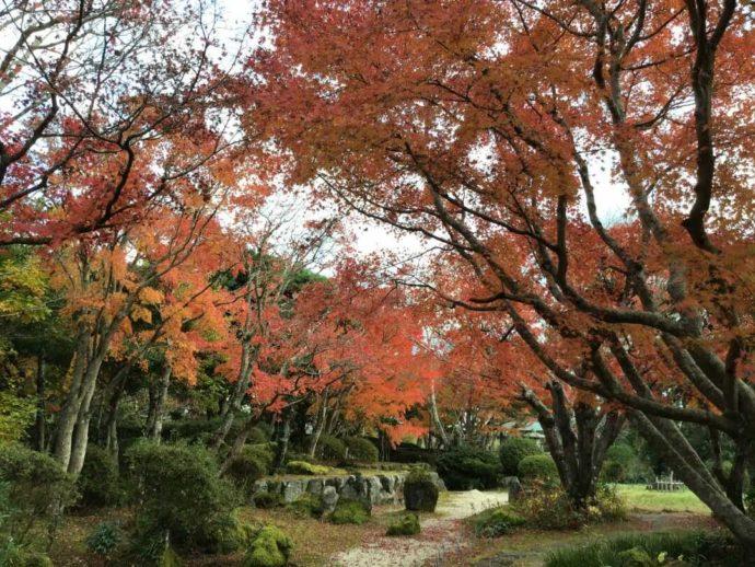 千葉県館山市にある城山公園の日本庭園と紅葉