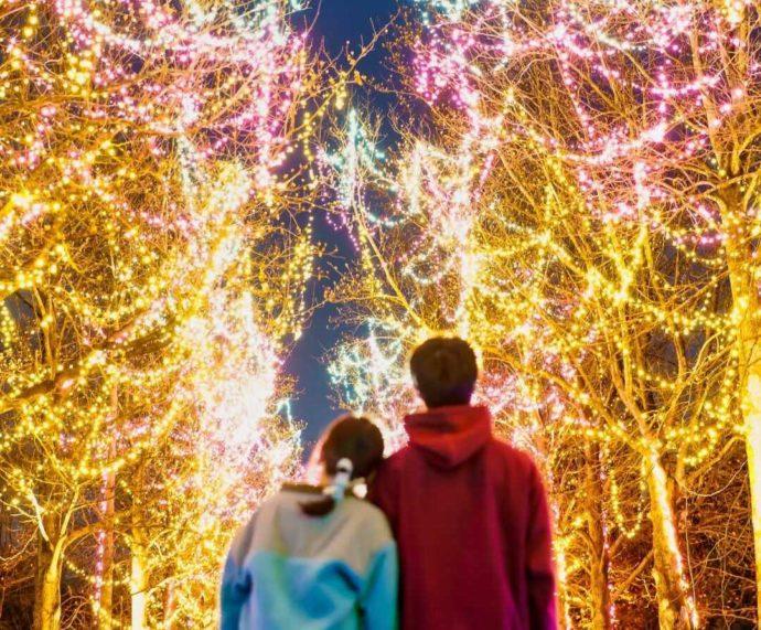 「とっとり花回廊」で冬のイルミネーションを満喫するカップルの後ろ姿