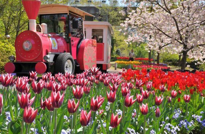 園内を一周15分で周遊する人気のフラワートレインと春の花