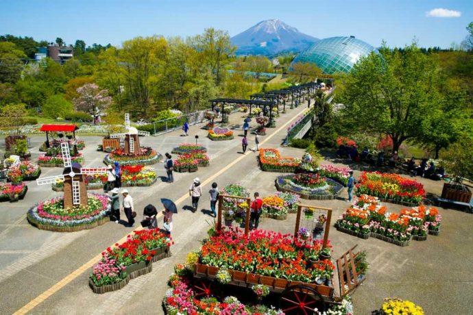 色とりどりの花で彩られた春の「とっとり花回廊」の西館テラス