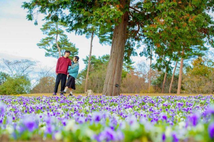「とっとり花回廊」の中でも最高の写真スポットとして人気の10万株の花の丘でデートするカップル