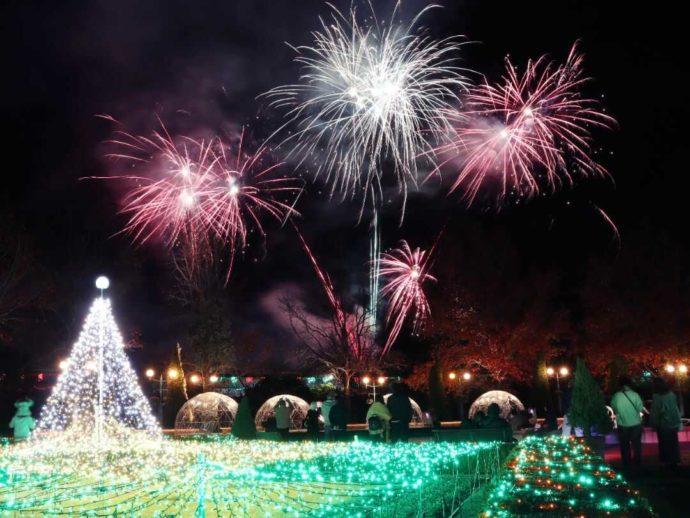 週末を中心に花回廊冬花火が楽しめる「とっとり花回廊」のワンシーン