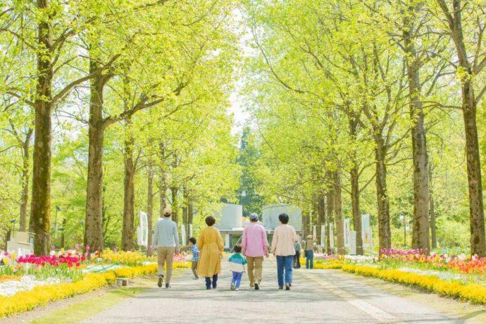 春のとっとり花回廊を楽しむ家族連れの後ろ姿