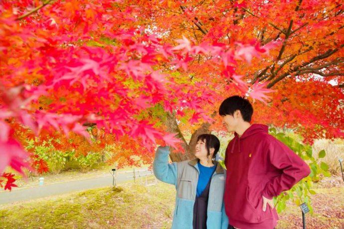 「とっとり花回廊」で秋の紅葉を楽しむカップル
