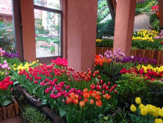 チューリップ四季彩館の早春の雰囲気