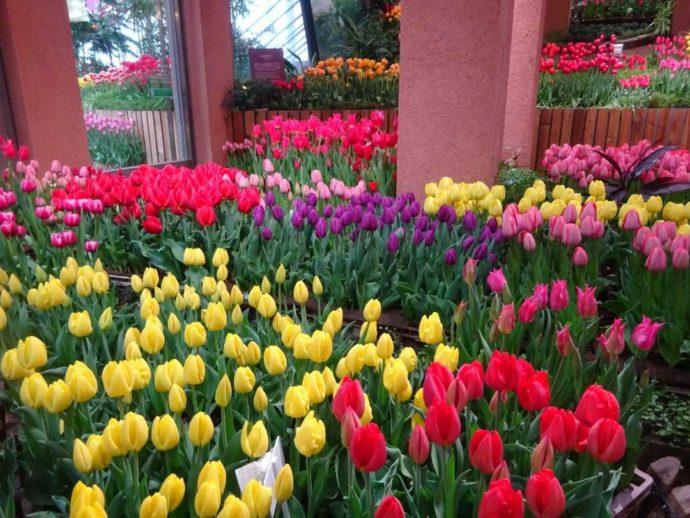 富山県砺波市にあるチューリップ四季彩館の「パレットガーデン」春の様子