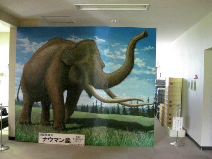 山形県にある「うきたむ風土記の丘考古資料館」展示室入り口前に置かれているほぼ等身大のナウマン象の絵