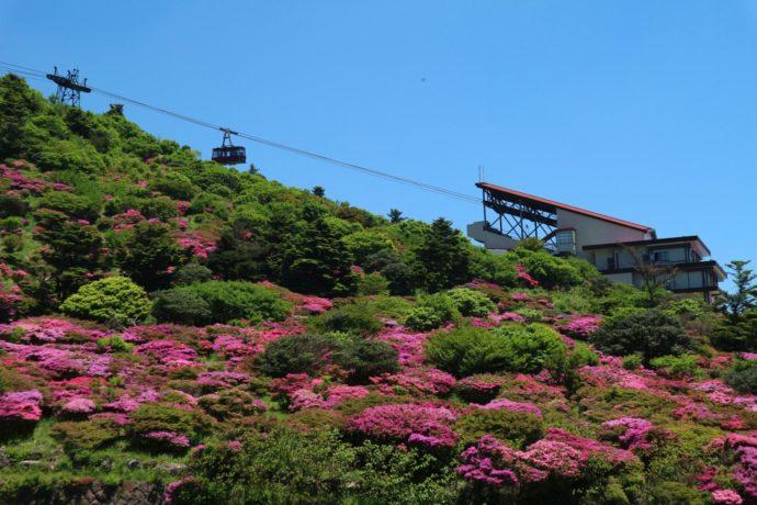 ツツジが咲き誇る仁田峠展望所