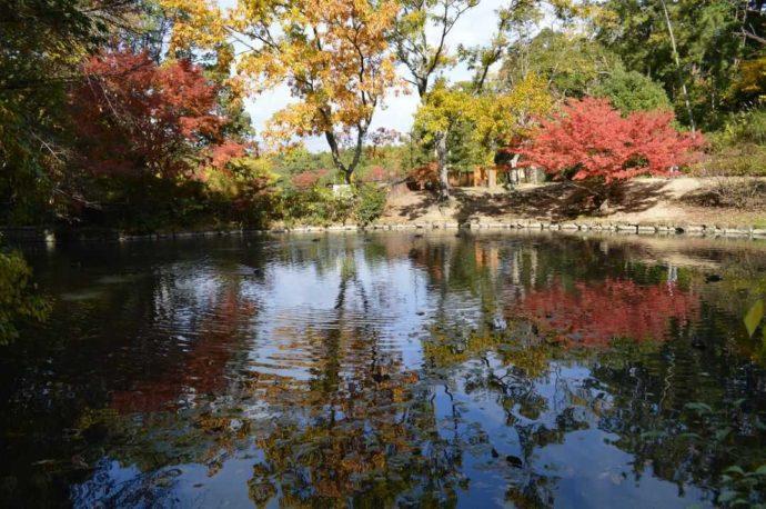 水辺に映る美しい紅葉
