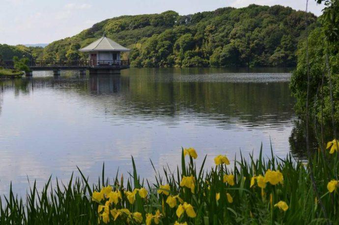 周囲を大自然に囲まれている枚方市の山田池と浮見堂