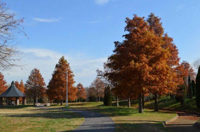 山田池公園の南地区の芝生広場と紅葉