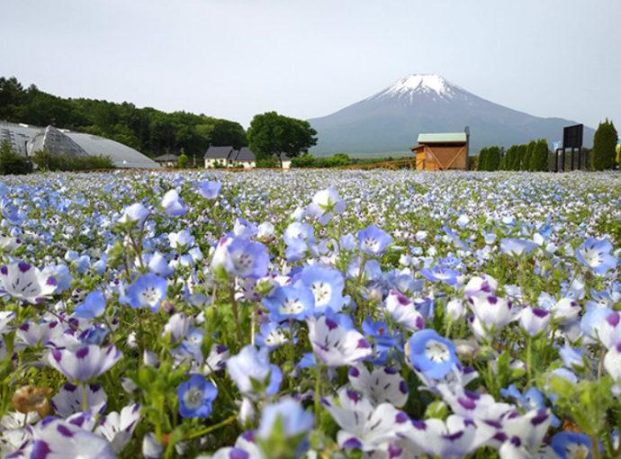 山中湖花の都公園での風景