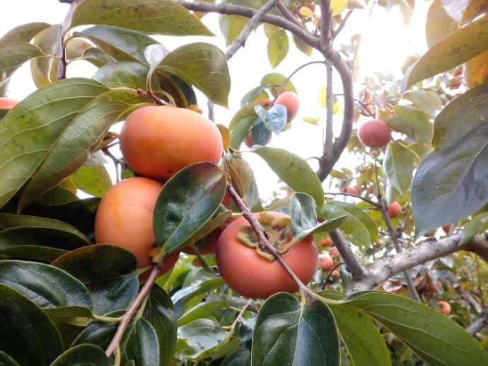 うきは果樹の村観光農園やまんどんならではのメリットやおすすめポイントはありますか