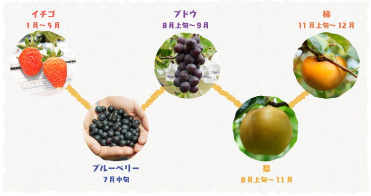 果物が収穫できる時期について