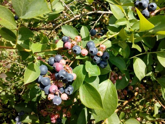 うきは果樹の村観光農園やまんどんの果物狩りの料金や入園料について教えてください
